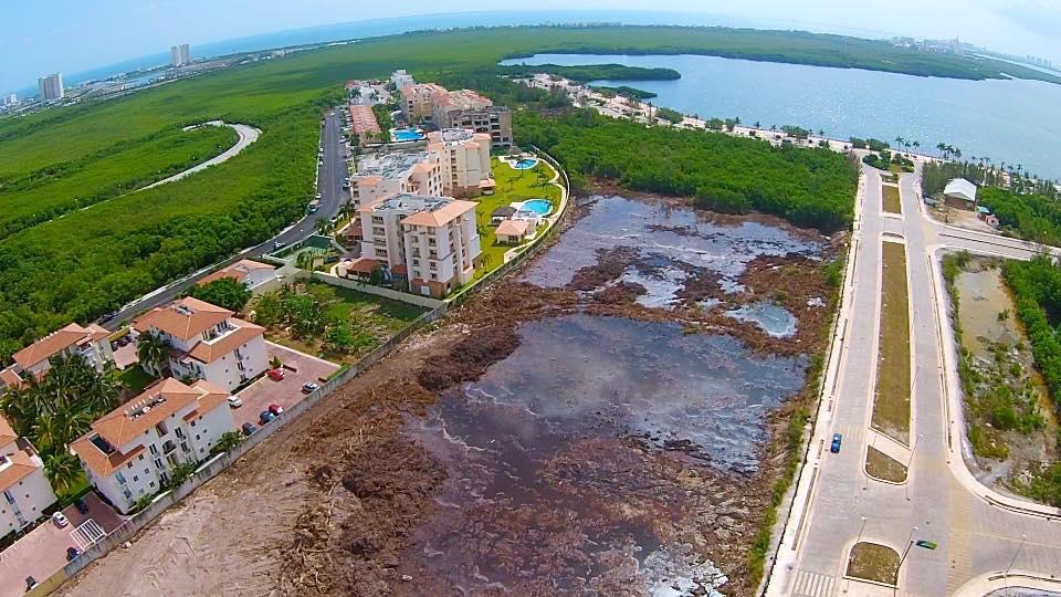Tajamar, los manglares y cómo estamos acabando con nuestro entorno por unos pesos