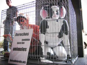 ¿Tienen derechos los animales?