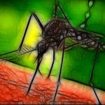 Cuando pican los mosquitos